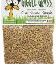 Cat grass seeds for cats
